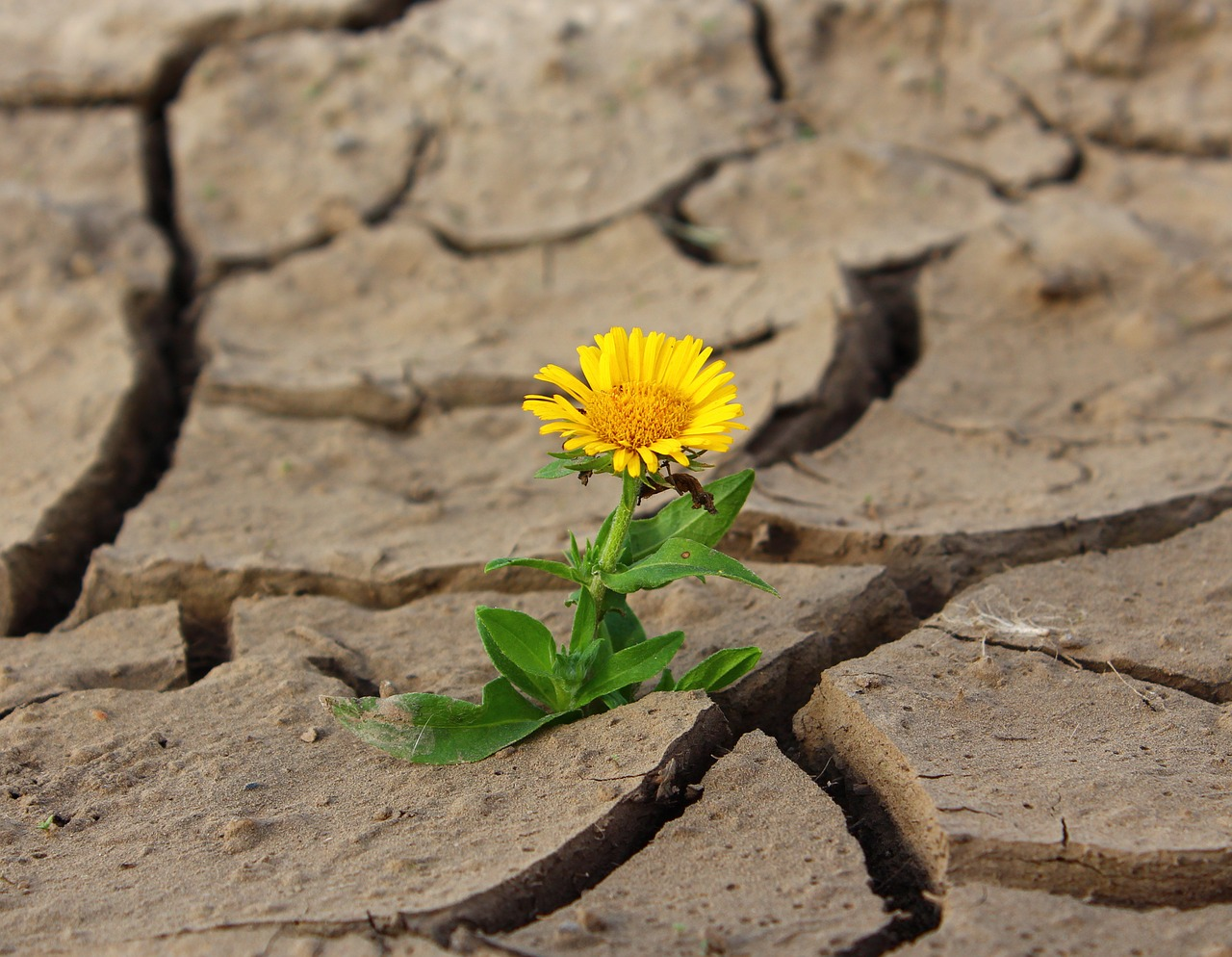flower, life, crack